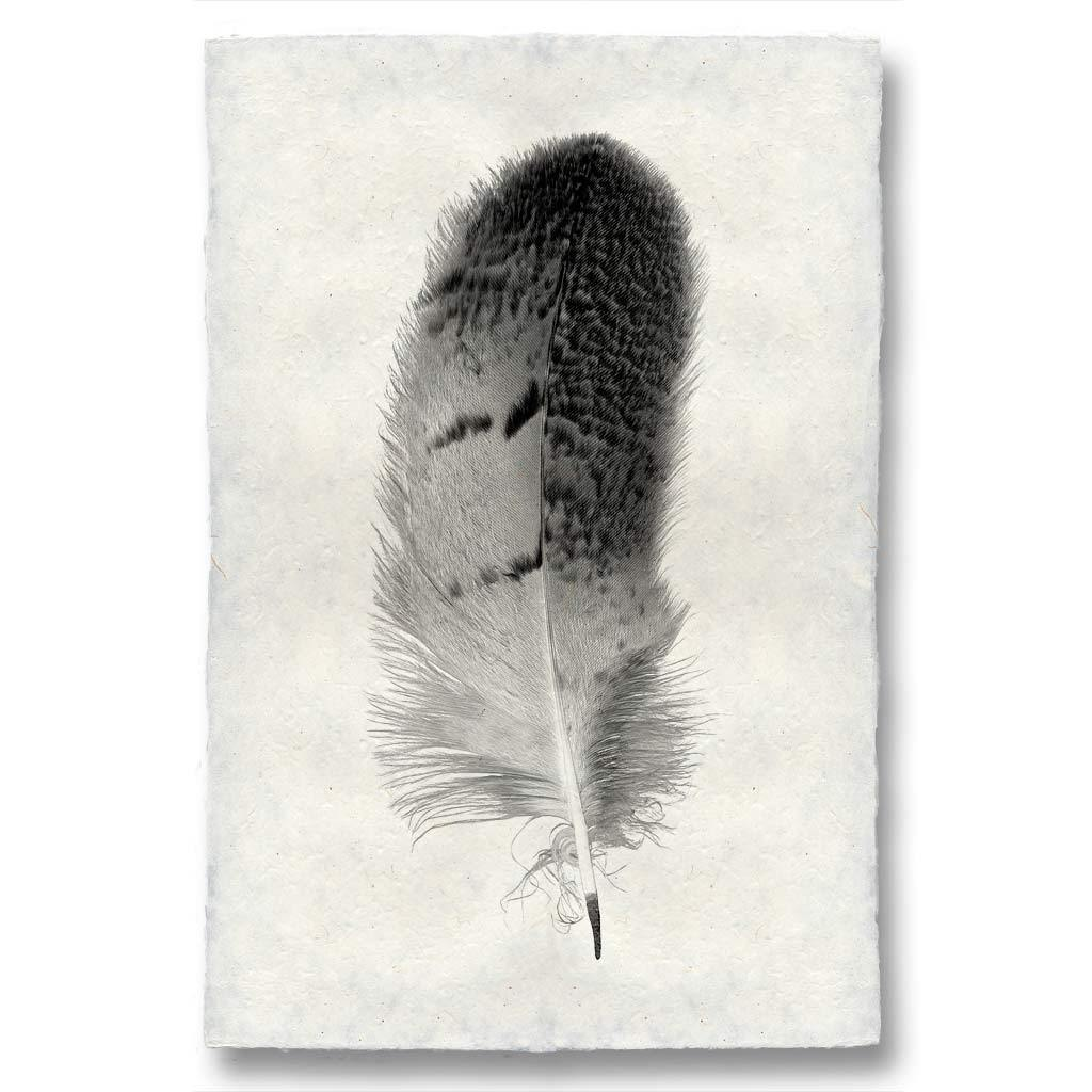 FEATHER STUDY #7
