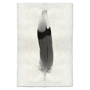FEATHER STUDY #9