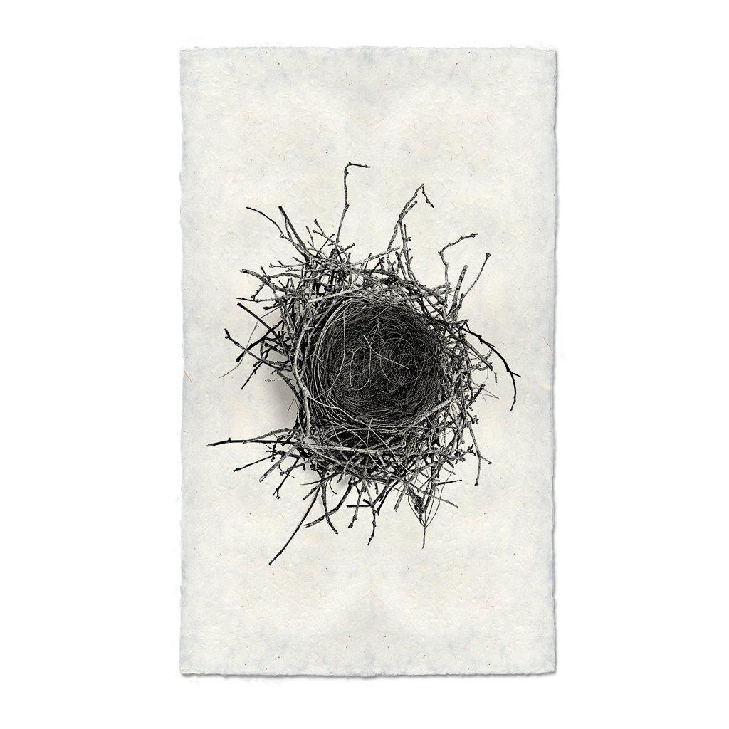 NEST STUDY #2 FRAMED ART