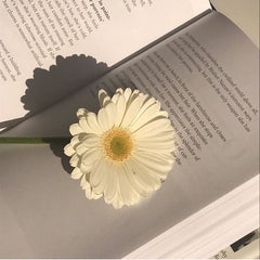 Flower on a book