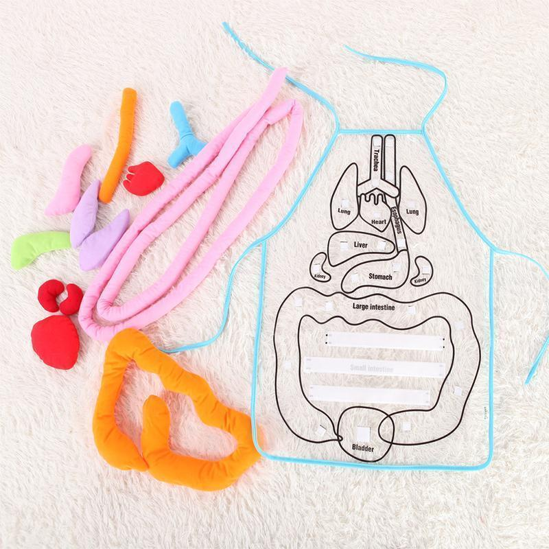 Body Anatomy Apron - An Educational Toy for Children