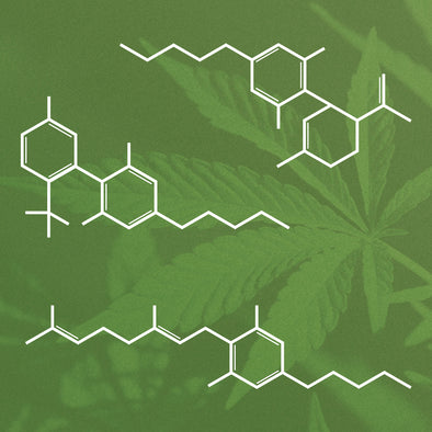 WHAT IS THE ENTOURAGE EFFECT AND WHY IS IT CRUCIAL TO USING CANNABINOIDS SUCCESSFULLY?