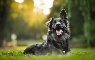 UNDERSTANDING THE ENDOCANNABINOID SYSTEM OF DOGS