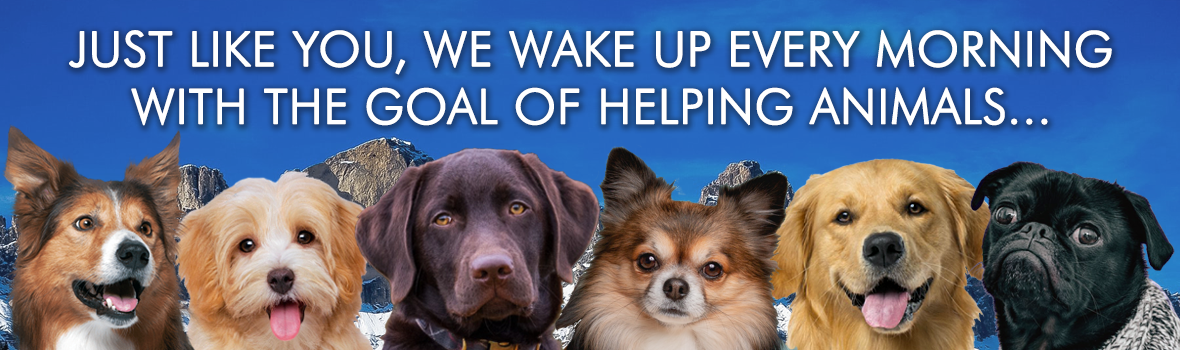 Just like you, we wake up every morning with the goal of helping animals...
