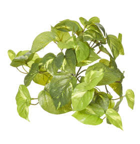 Artificial Pothos Bush 13x13x30cm Green