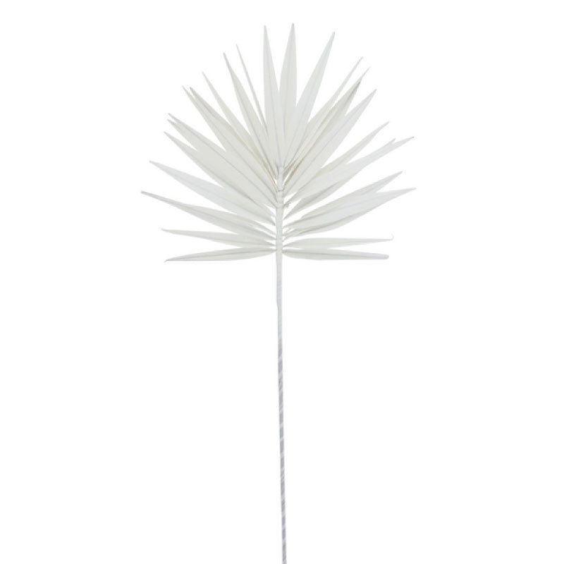 White Palm Fan