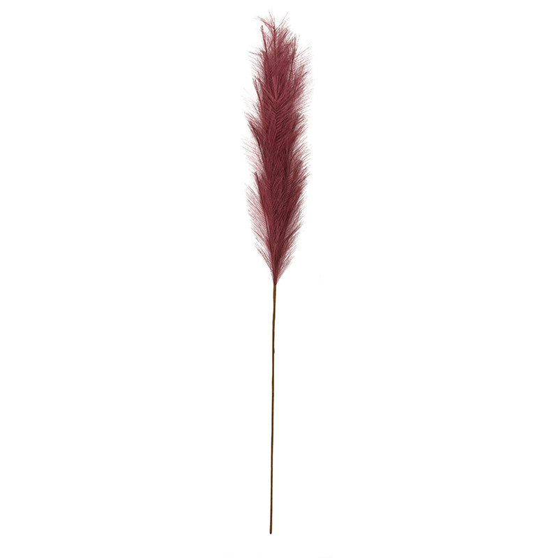 Pampus Grass Claret 130cm