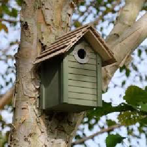 A guide to putting up a nest box