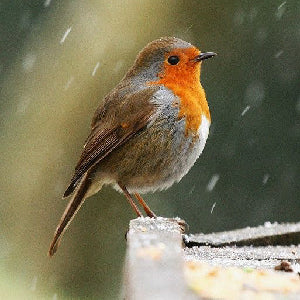 Birdsong can boost mental well-being for more than four hours, scientists find
