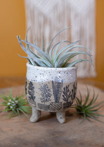 Potted Plants Planter
