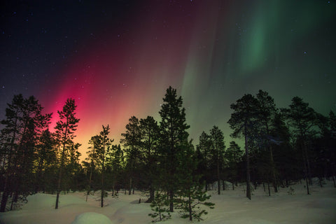 The northern lights shining above trees
