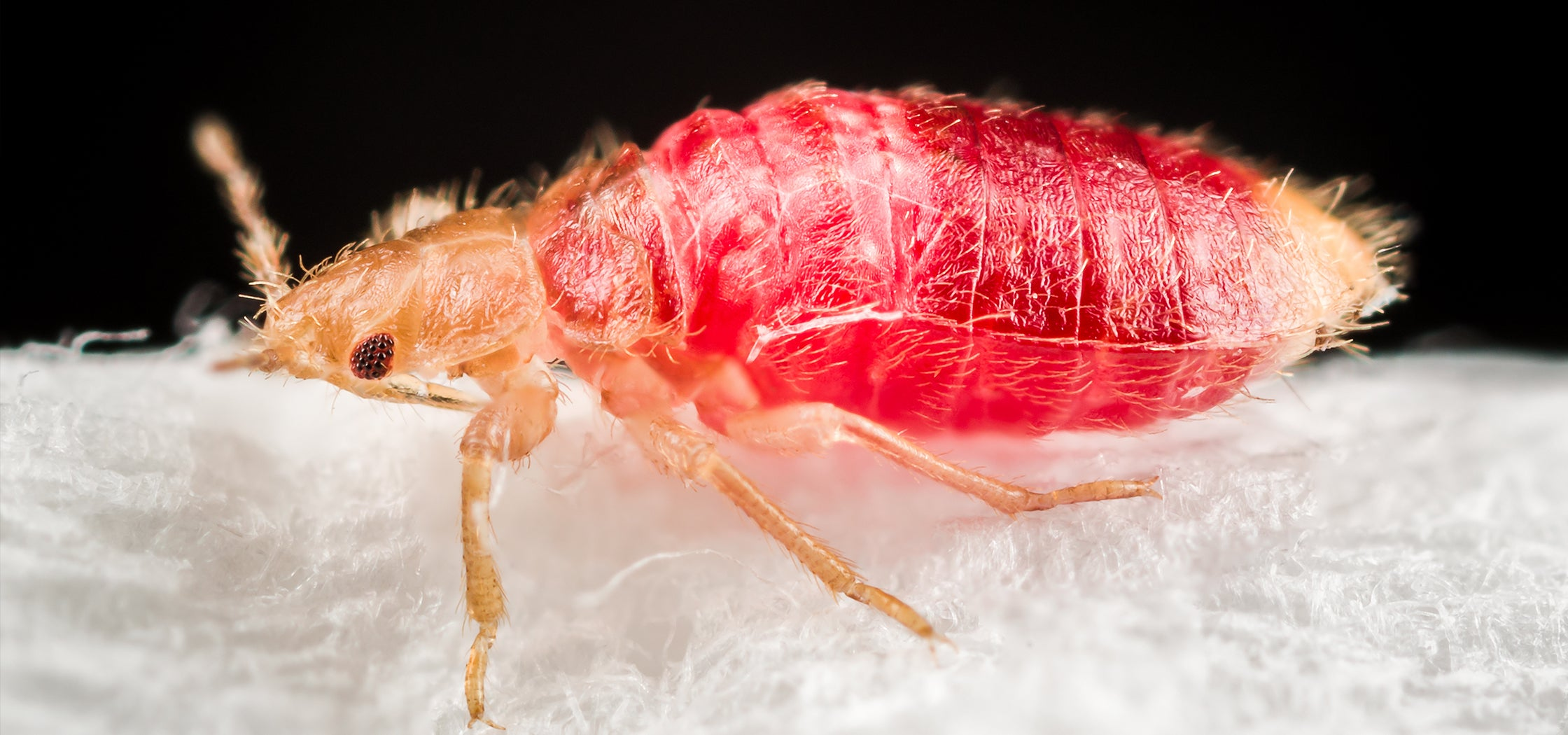Safe Bed Bug Treatments: How Do I Know if I'm Treating Bed Bugs Safely?