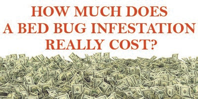 the true bed bug treatment costs for your business? | convectex
