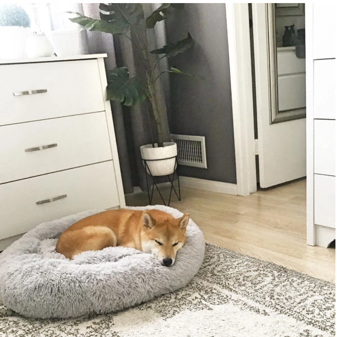 Comfy Calming Dog|Cat Bed
