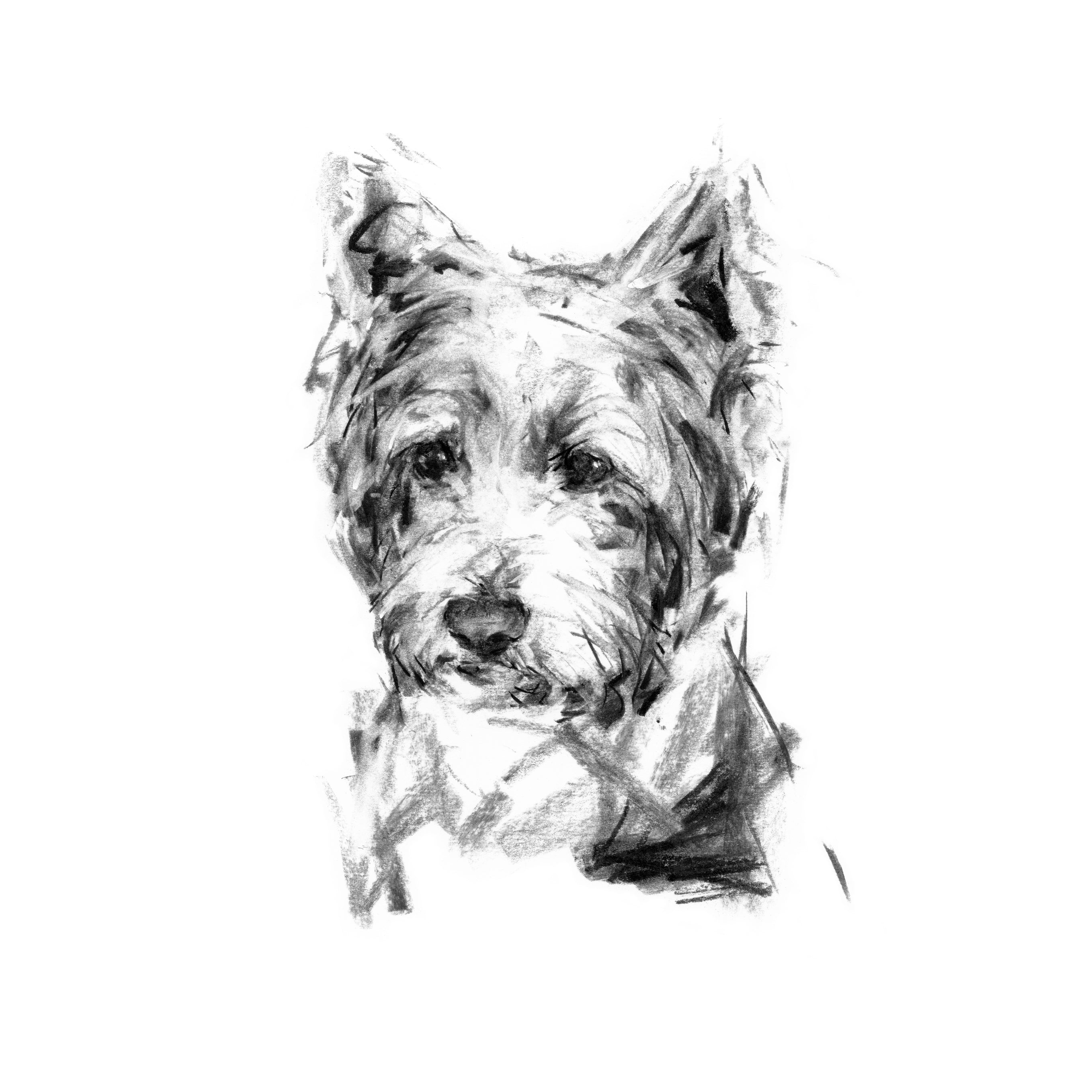 Pensive Westie - Pack of Correspondence Cards