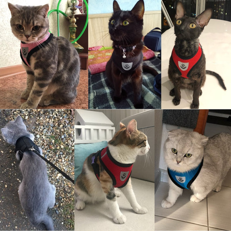 Outdoor Cat Harness and Leash - Customer Reviews