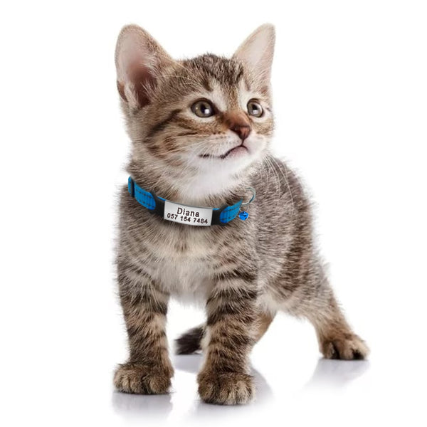 Personalized Nylon Cat Collar - Blue With Cat