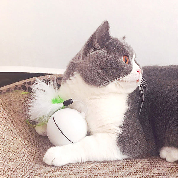 Electric Rolling Ball Cat Toys - With Cat
