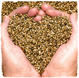 Health Benefits of Consuming Hemp