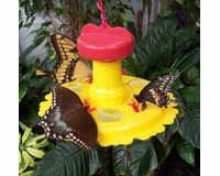Songbird Essentials Butterfly Feeder/Nectar Combo.