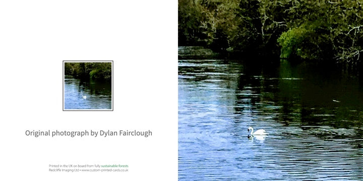 Swan in Fish Pond Lake- Greeting card by Dylan