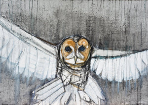 Barn Owl - Mounted Print