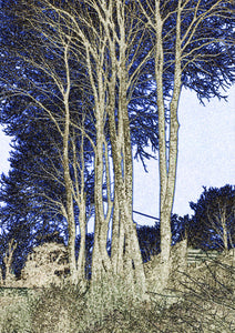 Winter Trees - Greeting Card