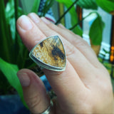 Fossil Sequoia and Sterling Silver Ring