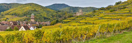 Vineyards outside a small village in Alsace, France.
