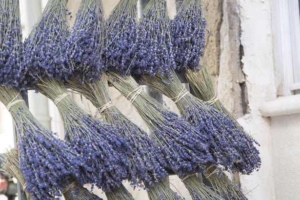 Bunches of lavender at a market in Provence, France.
