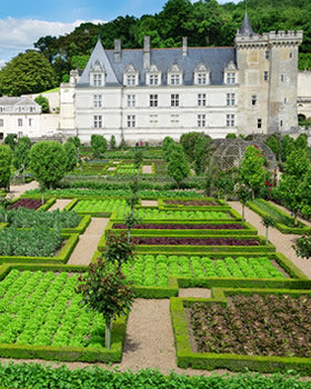 Two Loire Castles Plus Vouvray Tastings