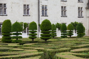 The manicured trees in Villandry gardens.