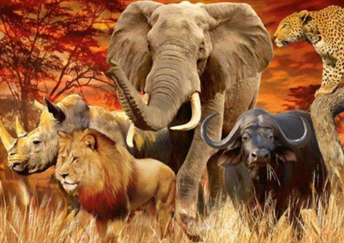 The Famous 5 in Africa