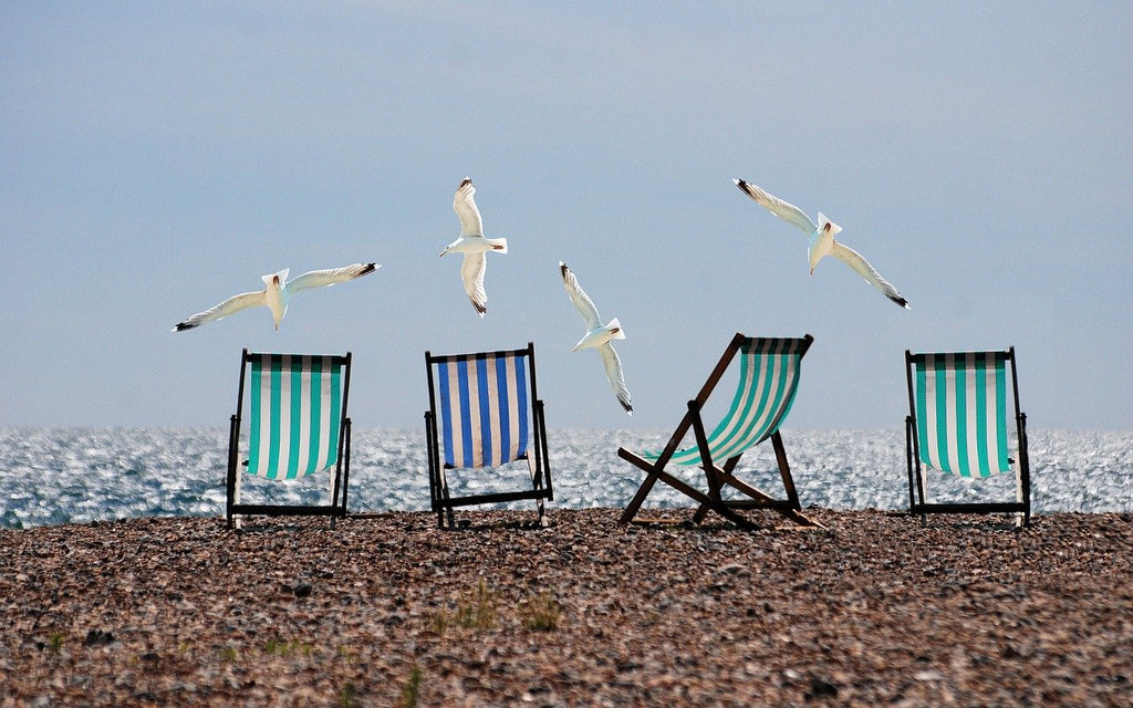 Beach Chairs and Gulls