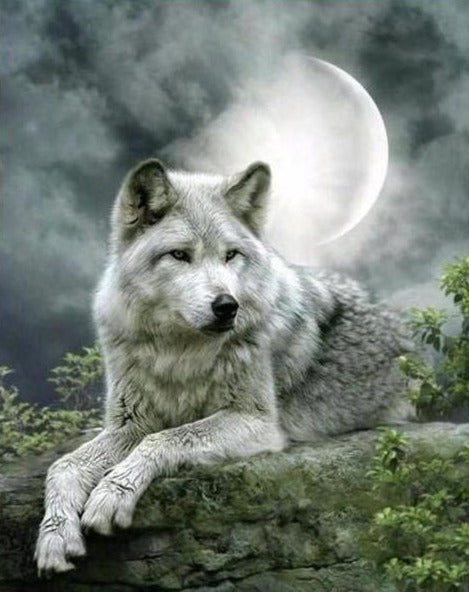 Beautiful Wolf in Moonlight