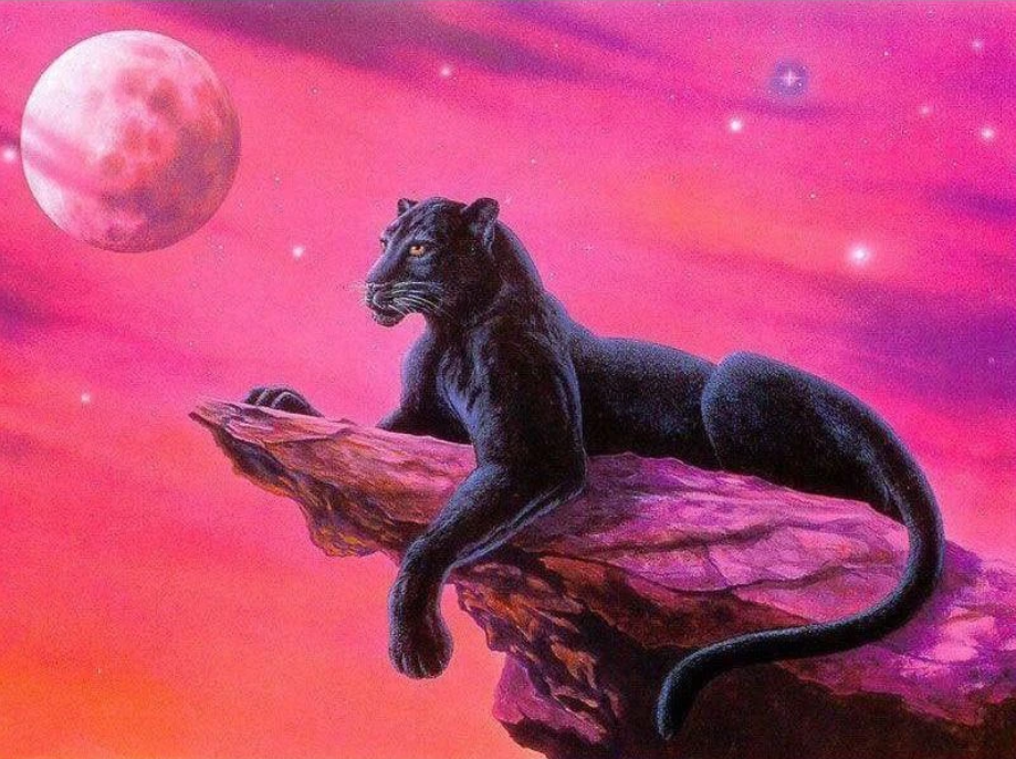 Black Panther on a Rock