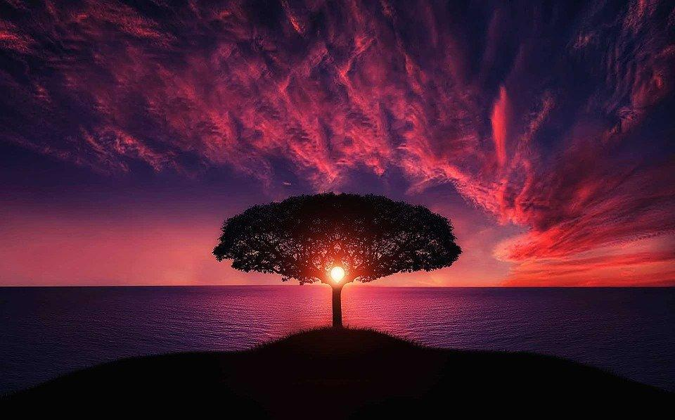 Red Sunset Tree