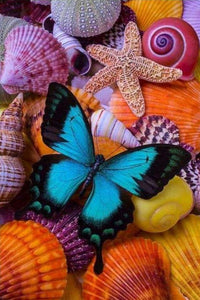 Butterfly and Sea Shells