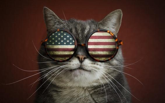 Cat with American Flag