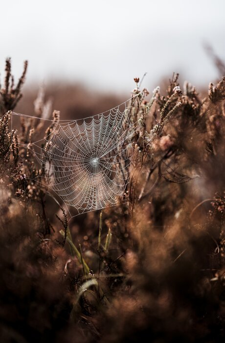Cobweb in the Morning Dew