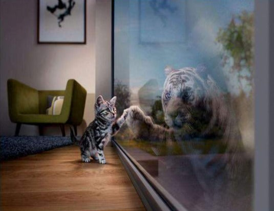 Little Tiger meets Big Tiger