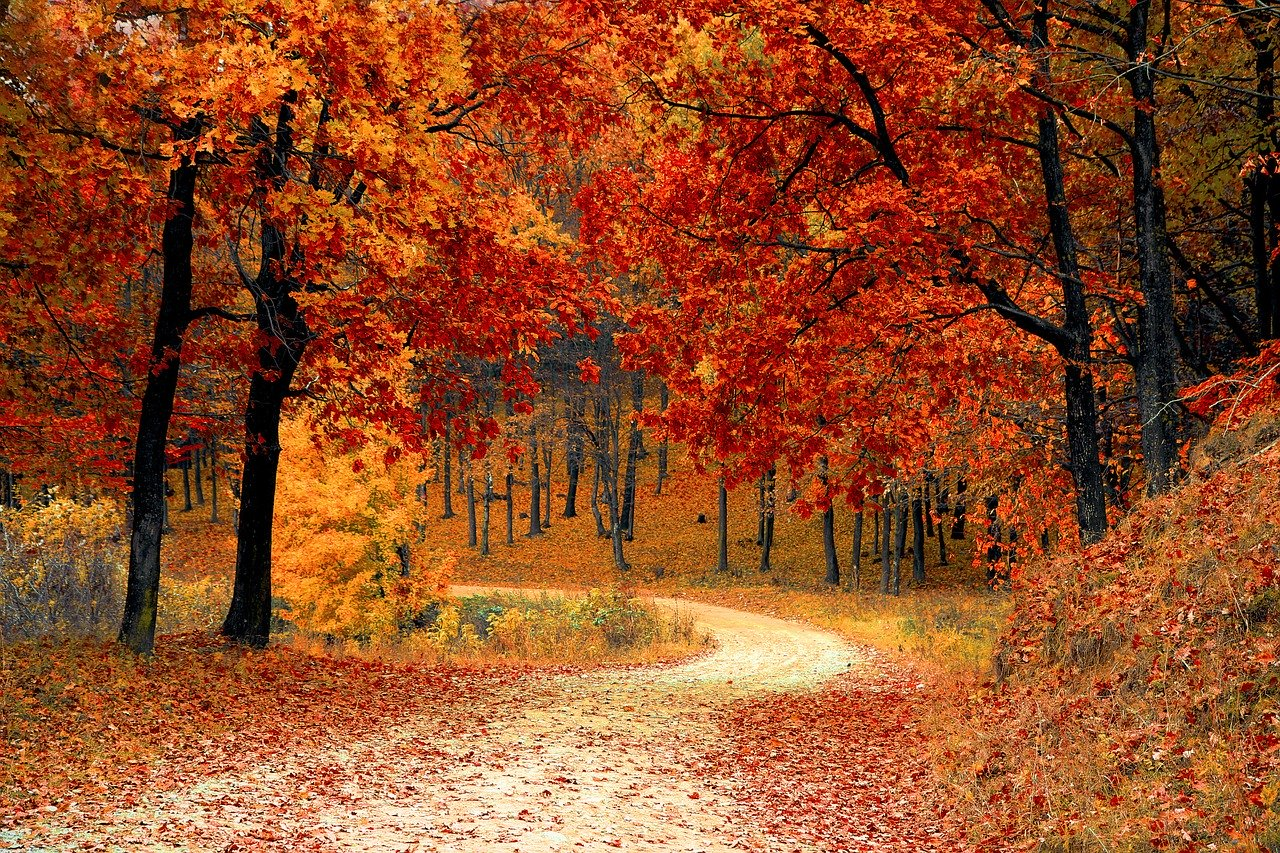 Forest Trail in Autumn