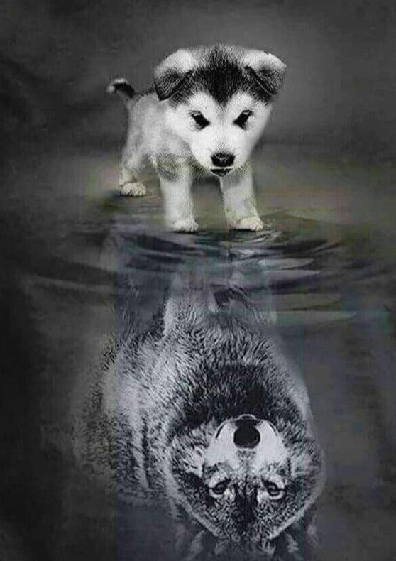 Dog Wolf Reflection