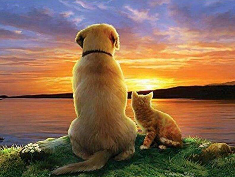 Dog and Cat at Sunset
