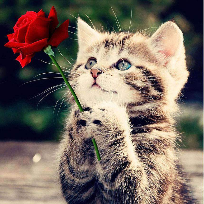 Kitten with Red Rose