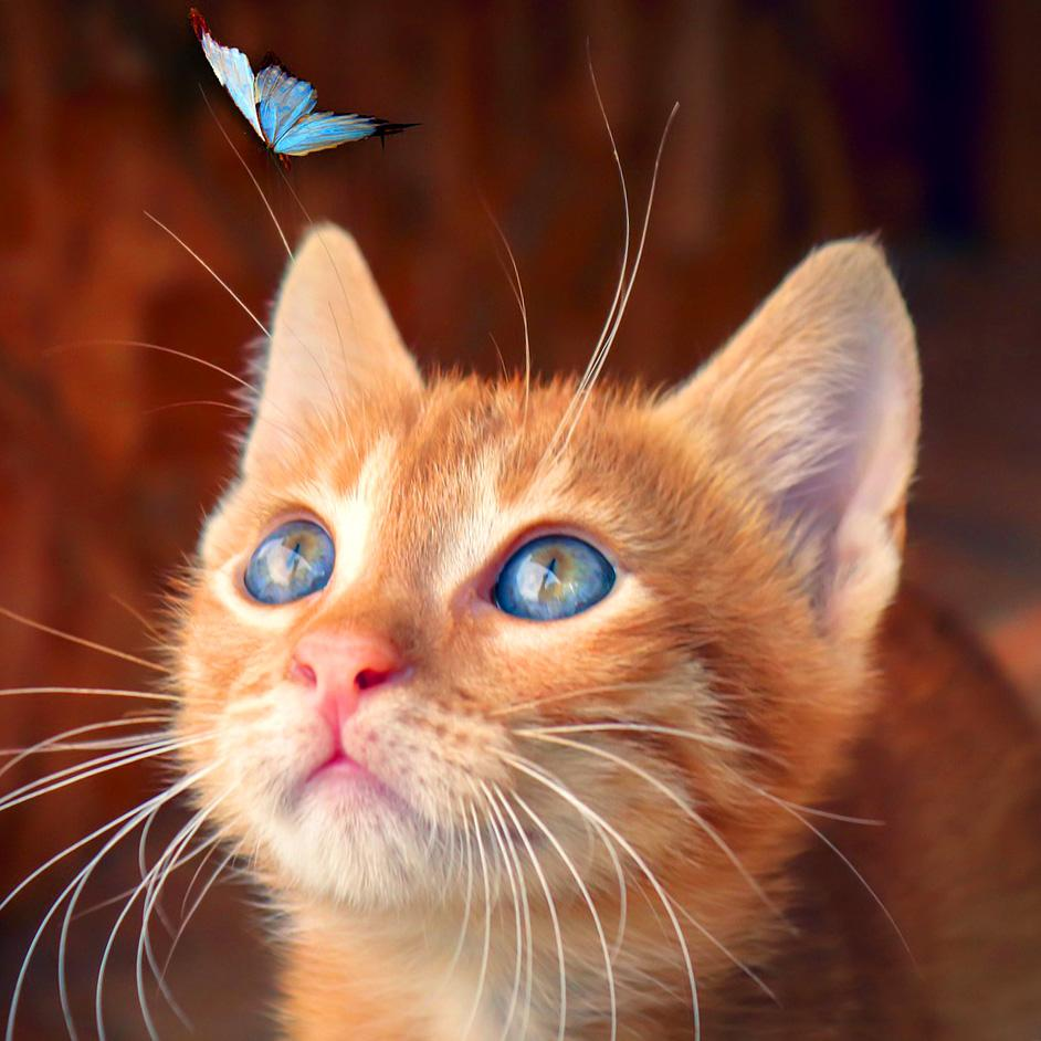 Kitten and Blue Butterfly