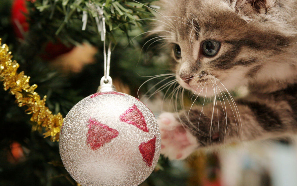 Kitten Plays With Christmas Ball