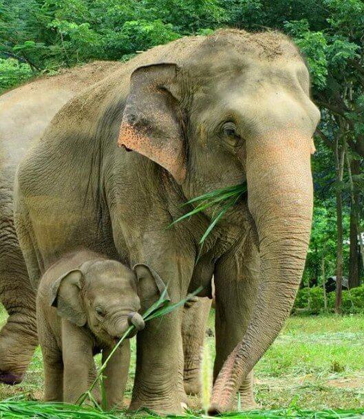 Mother Elephant with her Little One