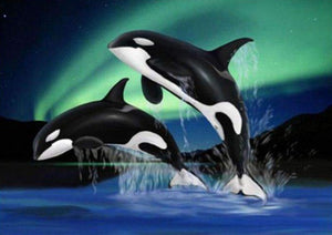 Whales and The Northern Light