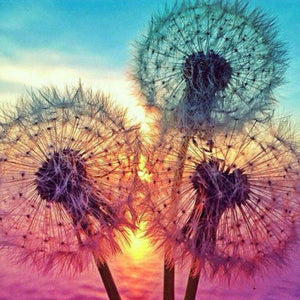 FREE Dandelions Sunset (Just Pay Shipping)